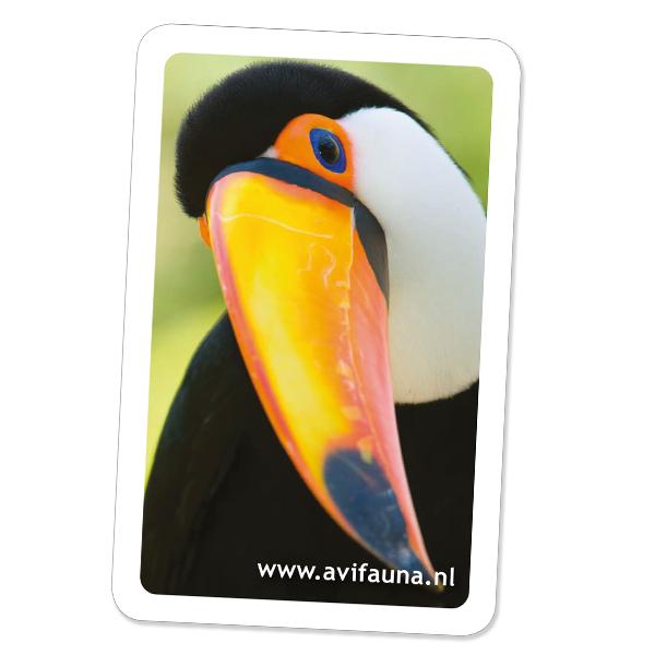 Avifauna Vogelpark, Alphen Aan De Rijn, Nederland